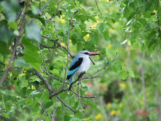 Contact - Woodland Kingfisher