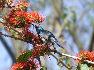 Contact - sunbird